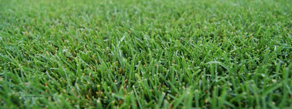 Wholesale Turf Seed | BrettYoung