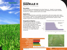 Gazelle II Techeet